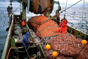 Spain is the main fishing nation in the north east Atlantic Ocean, accounting for half of the European catch of deep-sea species