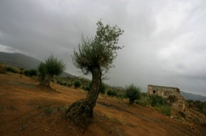 Droughts have already spiked olive prices up 30% since the beginning of the year