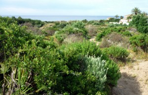 Barronal de la Morera dunes are still facing destruction