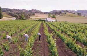 Organic wine from the Federico Schatz vineyard near Ronda