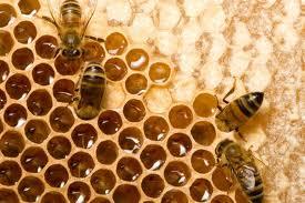 Honey making