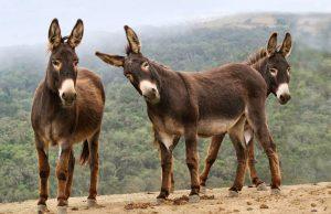 Donkeys in need